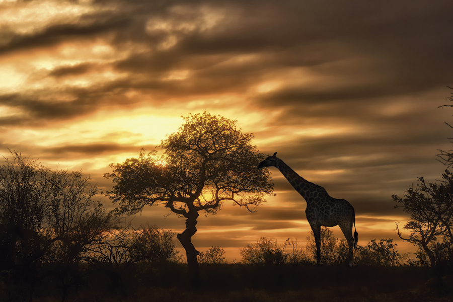 Evening-game-drive