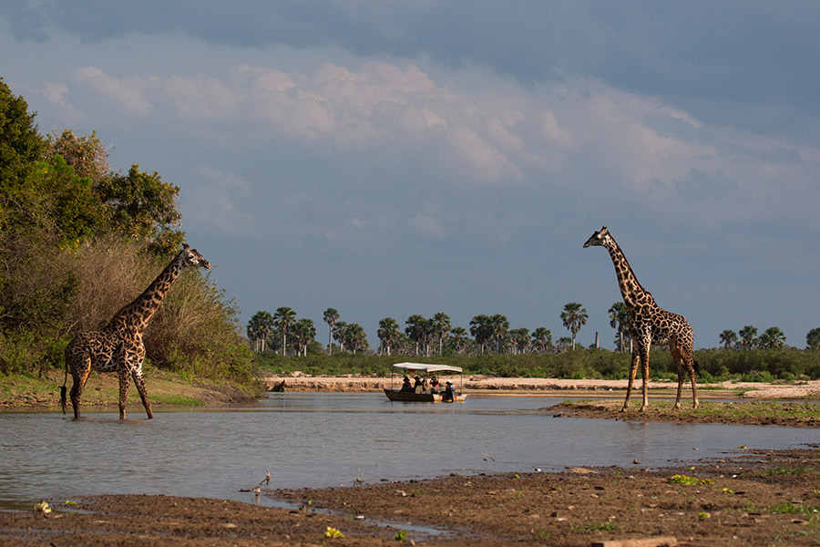 Selous Game Reserve, Tanzania - July 19th 2007, Tourists viewing giraffes from a boat.
